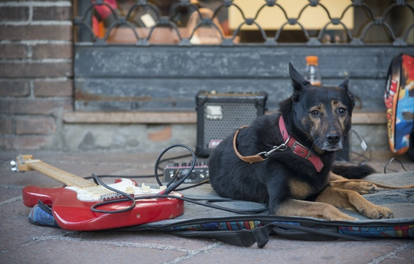 Picture street, guitar, dog