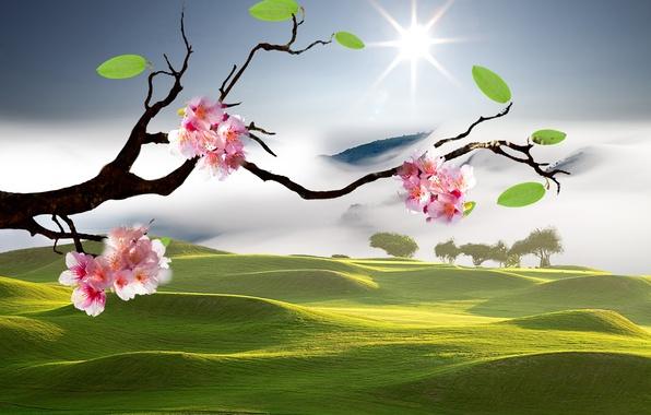 Picture Sakura, Eastern landscapes