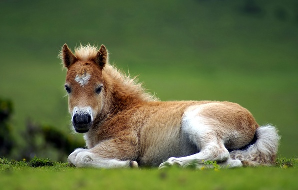 Picture nature, horse, foal