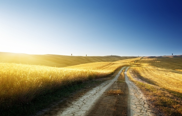 Picture road, wheat, summer, the sky, grass, freedom, the sun, light, trees, traces, nature, blue, heat, ...
