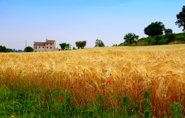 Picture field, flowers, house, Maki, slope, harvest