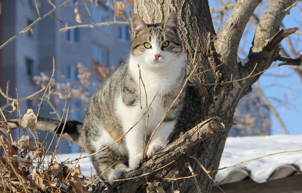 Picture winter, cat, snow, branches, tree