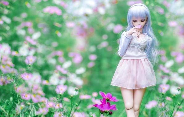 Picture summer, girl, doll, meadow, kosmeya