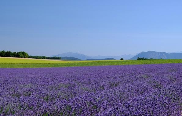 Picture field, the sky, mountains, horizon, farm, lavender, lavender field