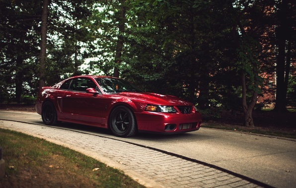 Picture forest, red, red, ford mustang, cobra, Ford Mustang