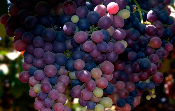 Picture macro, grapes, bunch
