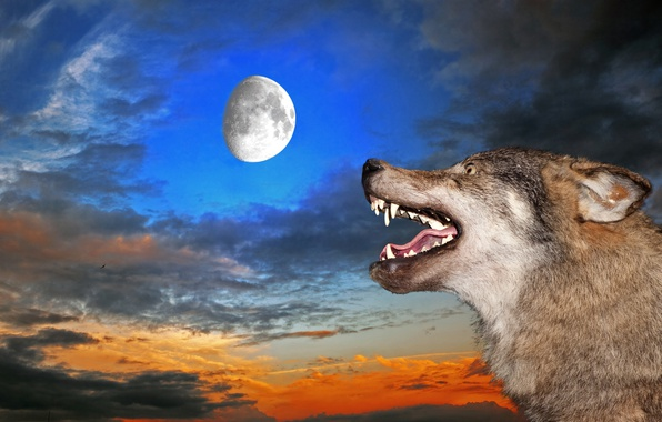Picture the sky, the moon, wolf, mouth, fangs, grin