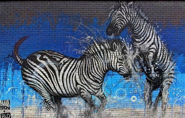 Picture wall, paint, graffiti, Graffiti, Zebra