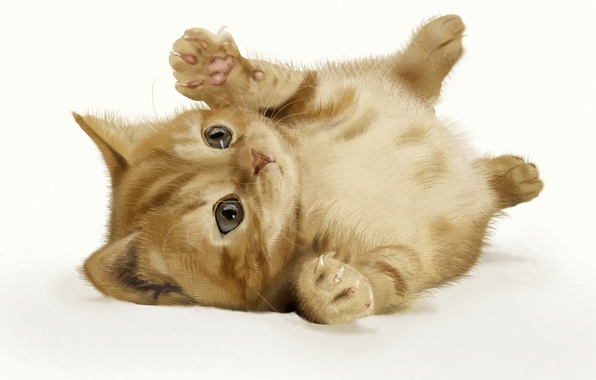 Picture cat, background, art, red, kitty, lying