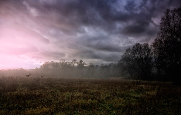 Picture field, trees, clouds, fog