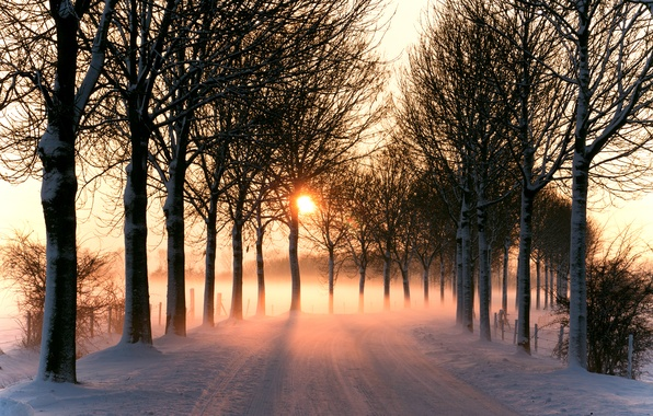 Picture winter, road, the sun, light, trees, nature