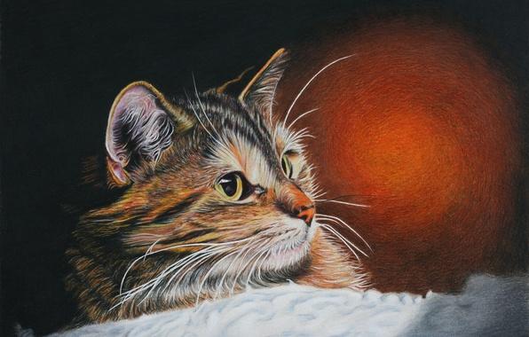 Picture cat, look, Koshak, painting, Tomcat