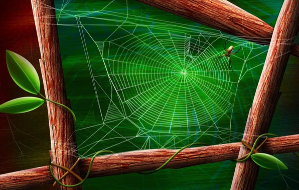 Picture sheet, green, spider, Web