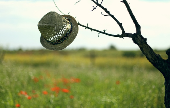 Picture background, tree, hat