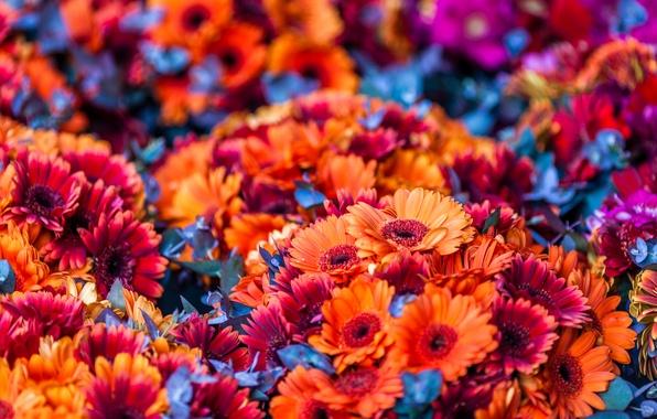 Picture flowers, orange, a lot, bouquets