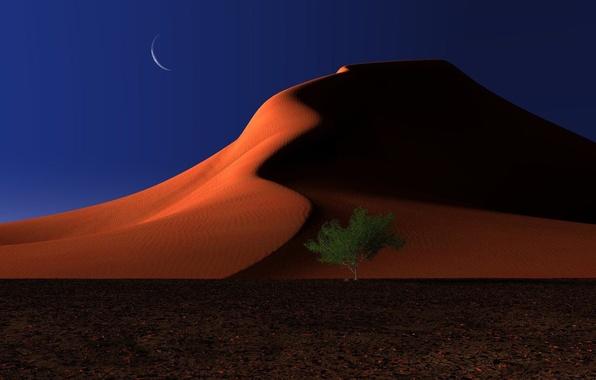 Picture sand, night, tree, the moon, desert, dunes, digital, respite