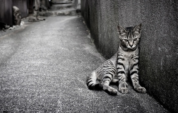 Picture cat, cat, wall, black and white