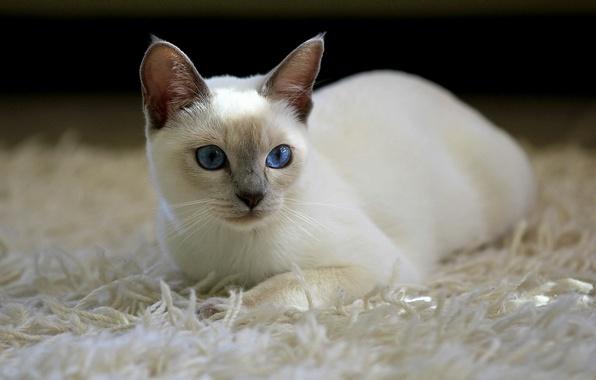 Picture cat, cat, carpet, white