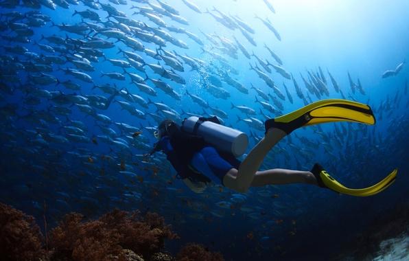 Picture fish, landscape, the ocean, stay, corals, diver, diving, underwater, cant, bokeh, scuba, diving, travel, wetsuit, …