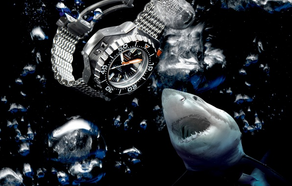 Picture water, shark, Watch, Omega, Seamaster, 1200M, Ploprof