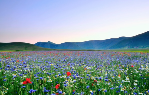 Picture field, the sky, flowers, mountains, Maki, chamomile, valley, self