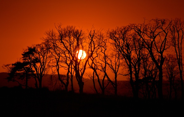 Picture the sun, trees, sunset, hills