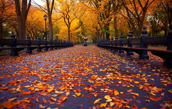 Picture autumn, leaves, trees, bench, nature, Park, New York, alley, trees, nature, park, New York City, …