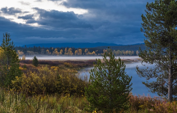 Picture forest, trees, clouds, fog, lake, USA, Wyoming, the bushes, national Park, Grand Teton, Wyoming, Grand …
