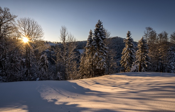 Picture winter, forest, the sun, snow, nature, morning, Switzerland, St. Gallen, Hulftegg, Philipp Häfeli Photography