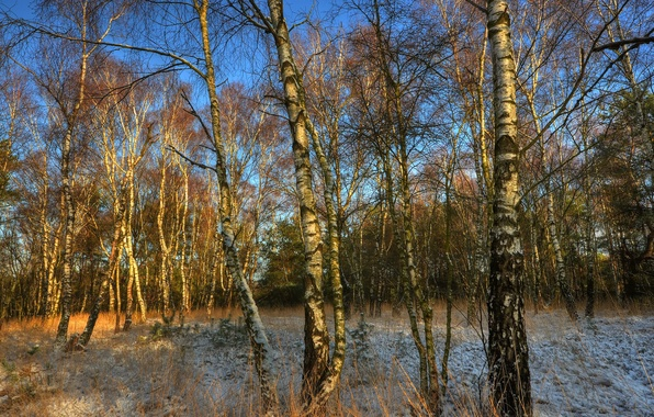 Picture frost, autumn, the sky, trees, birch, grove