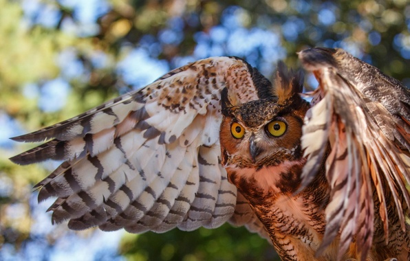 Picture eyes, owl, bird, wings, color