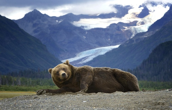 Picture mountains, predator, Alaska, Bear, lies, Grizzly