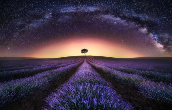 Picture field, the sky, stars, night, the milky way, lavender