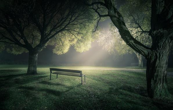 Picture light, trees, bench, fog, Park