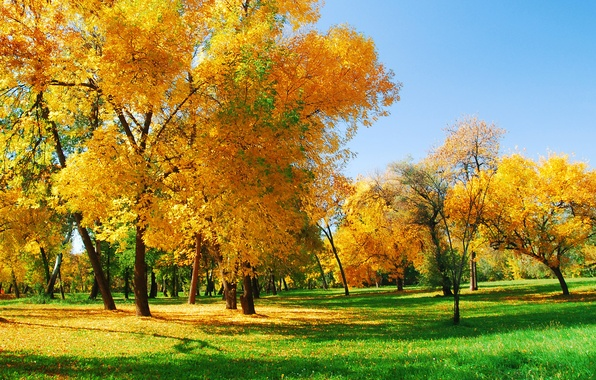 Picture autumn, forest, trees, Nature, sunlight