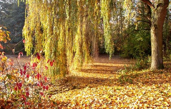 Picture autumn, trees, Park, tree, foliage, IVA, fallen