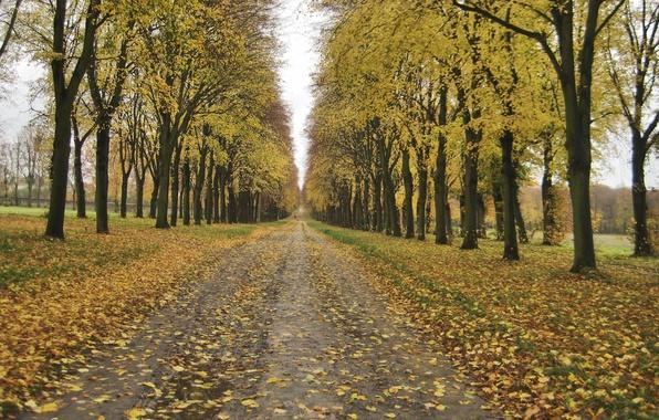 tree path track leaves - photo #12
