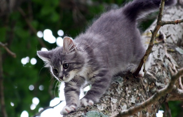 Picture cats, grey, tree, kataka
