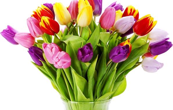 Picture flower, flowers, nature, Tulip, bouquet, spring, tulips, vase