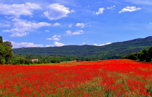 Picture field, trees, flowers, mountains, house, hills, France, Maki, meadow