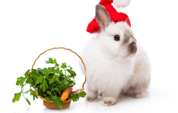Picture basket, rabbit, New year, carrots