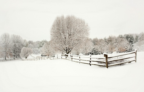 Picture winter, snow, trees, landscape, nature, the fence, fence, ate, wooden, tree