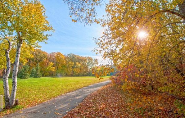 Picture autumn, rays, light, trees, Park, track