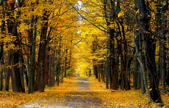 Picture road, autumn, forest, Sunny day, country