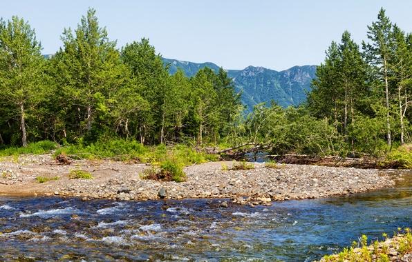 Picture trees, mountains, stream, stones, Russia, Kamchatka, Kamchatka