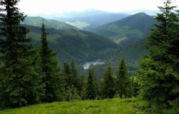 Picture mountains, nature, lake, ate, Ukraine, Carpathians, Transcarpathia, Synevyr
