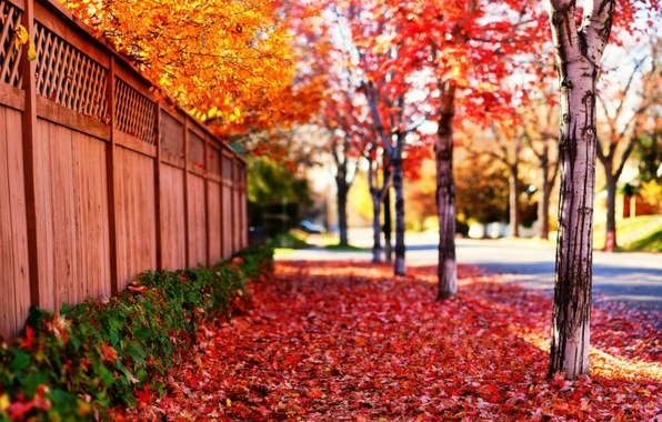 Picture road, leaves, the sun, trees, landscape, flowers, nature, background, tree, the fence, beauty, spring, falling ...