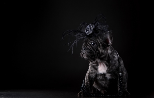Picture dog, puppy, beads, bow, French bulldog