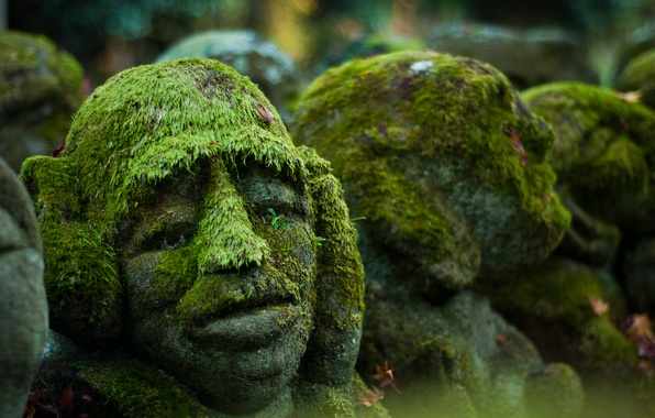 Picture background, moss, head