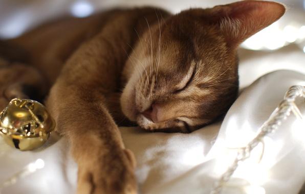 Picture cat, cat, new year, sleep, ball, sleeping, fabric, garland